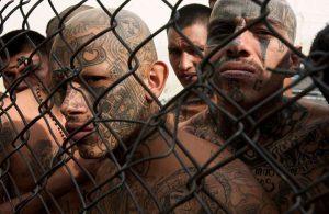 gjengmedlemmer i fengsel